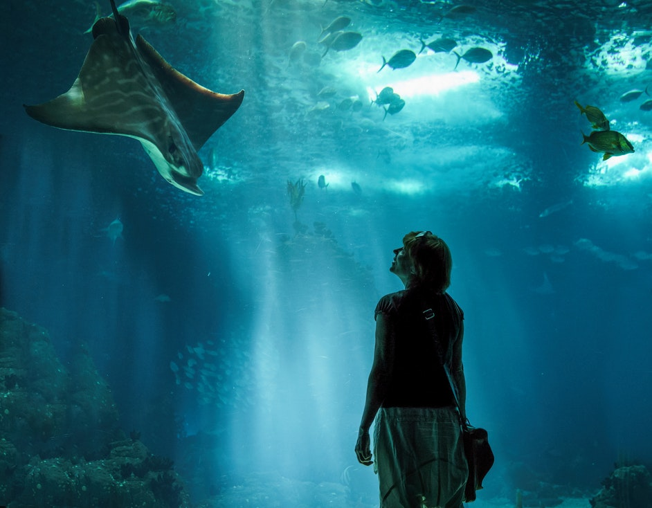 A woman standing in front of the glass at an aquarium.