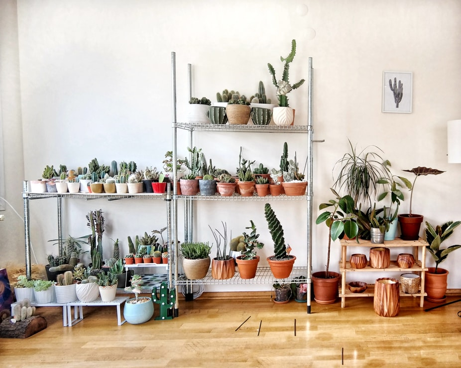 Houseplants, a popular 2019 interior design trend.